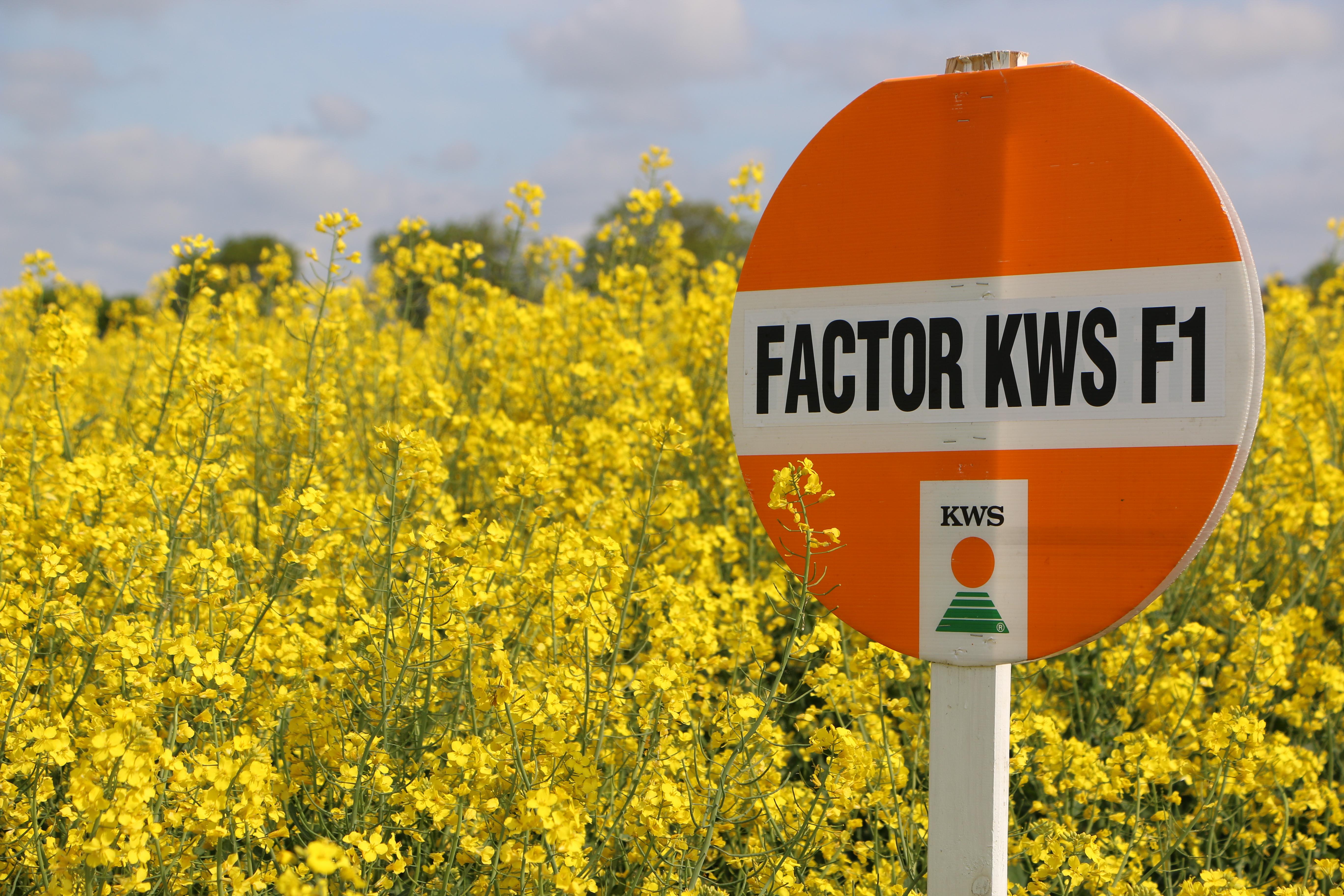 Rzepak FACTOR KWS F1