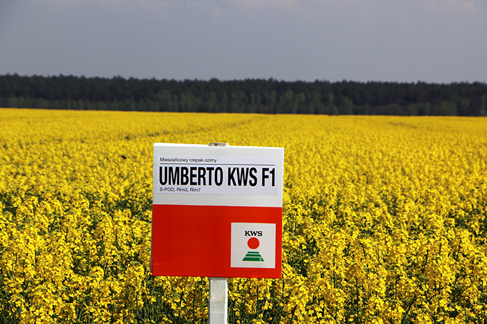 UMBERTO KWS F1