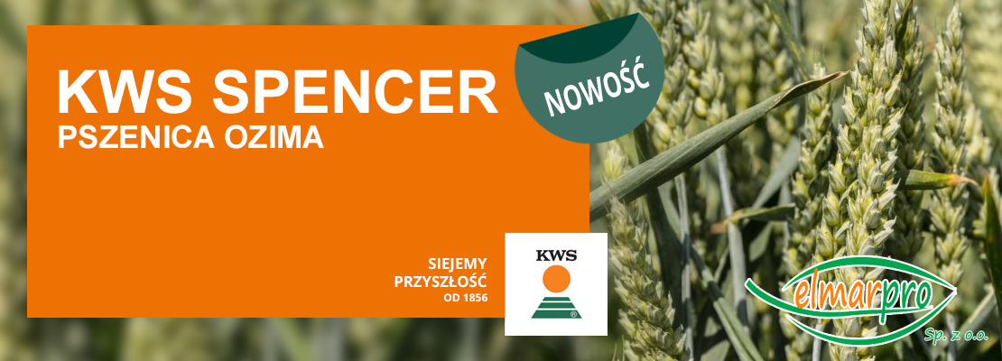 Pszenica KWS Spencer