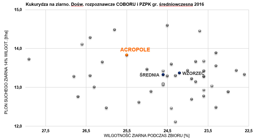 ACROPOLE - kukurydza