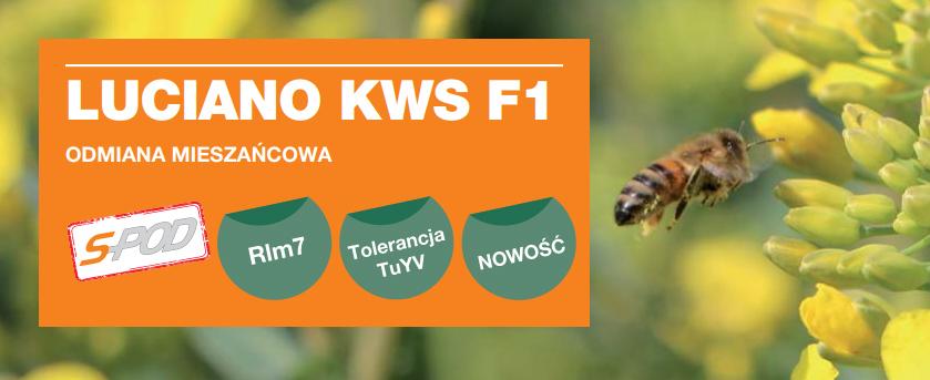 LUCIANO KWS F1